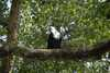 025_Ethiopia_Fish_Eagle.JPG