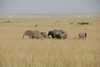 032_Kenya_Elephants.JPG
